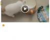Cara Mudah Download Video di LINE di Android